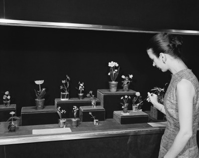 Henrietta Lloyd Near, State Services Assistant, cleaning the flowers in the gallery case